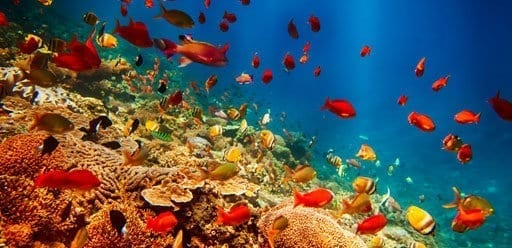 Bali Nusa