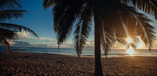 PMGY Volunteer Weekend trips in Sri Lanka watching sunrise behind a palm tree at Arugam Bay beach during their Volunteer work in Sri Lanka