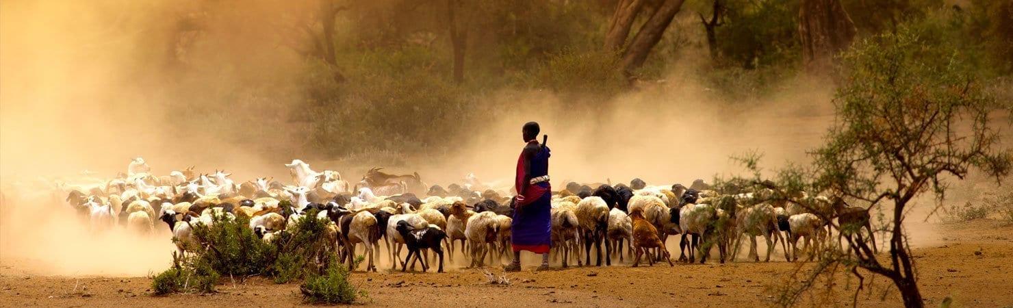 PMGY Volunteer Weekend trips in Tanzania watching a local farmer heard goats during their Volunteer work in Tanzania