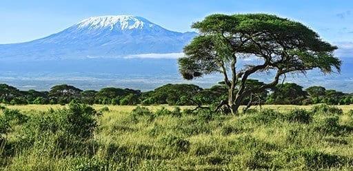 PMGY Volunteer Weekend trips in Tanzania trekking up Mount Kilimanjaro during their Volunteer work in Tanzania