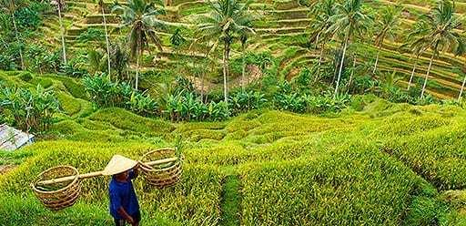PMGY volunteer in Bali visiting Jatiluwih Rice Terrace during their volunteer weekend trips in Bali