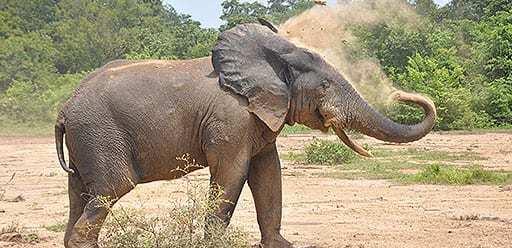 PMGY volunteer in Ghana watching elephants at Mole National Park during their volunteer weekend trips in Ghana