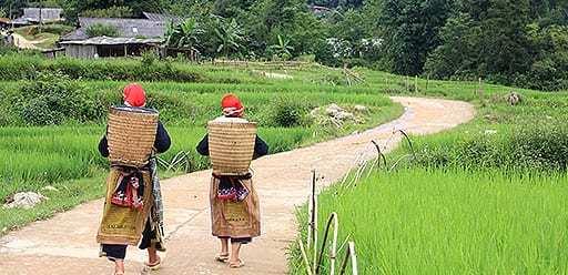 PMGY volunteer in Vietnam exploring the paddy fields in Sapa during their volunteer weekend trips in Vietnam