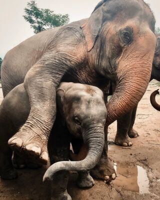 💞Cuddle time 💞  . . Friendly reminder: life is short. You never know when will be the last time you talk to someone or see them. Hug your loved ones today.  . . Also, don't ride elephants!