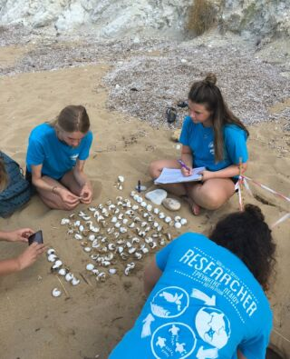 ⚠️Volunteers at Work ⚠️  There's still time to join these volunteers hard at work in Greece this year! 🇬🇷  Enjoy a wide range of fieldwork on our Sea Turtle Conservation project in Greece! 🐢  #pmgy #pmgygreece #pmgywildlife #volunteeringreece