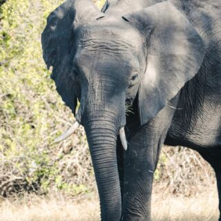 'This earth was made for all beings not just human beings'   How many of the big five will you spot during your safari in South Africa?  🐘🦏🐃🐆🦁  #pmgy #pmgysouthafrica #big5 #fridayfive