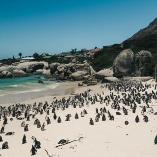 @ the person who you'd spend the day here with 😍🇿🇦🐧  #pmgy #pmgysouthafrica