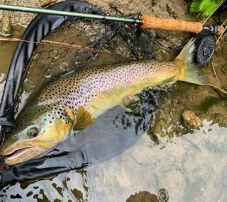 Torpille….. #domainedumoulinneuf #wfft #bigtrout #bigtroutdreams #flyfishing #flyfishingjunkie #flyfishingaddict #troutstreamers #trouttattoo #trout #troutofinsta #troutofinstagram #graylingfishing #graylingflyfishing #pikestreamer #pikeflytying #pikefishing #pikflyfishing #goldorak #lacdemadine