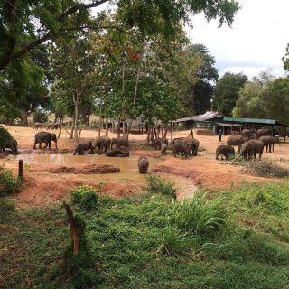 Elephant orphanage and safari. Worth the 2am start! 🐘❤️🐘 #pmgysrilanka #pmgywildlife