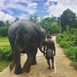 Morning walk with the elephants 🌴🐘☀️