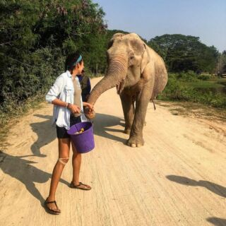 Today is World Elephant Day! 🐘⠀ ⠀ Do you love elephants as much as we do?⠀ ⠀ 🔎 Check out PMGY's opportunities to help protect these gentle giants⠀ ⠀ 🇱🇰 👉 http://bit.ly/sri-lanka-elephant-volunteers 🇹🇭 👉 https://bit.ly/thailand-elephant-volunteers  #pmgy #pmgythailand #pmgywildlife