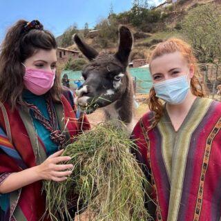 Llive Llove Llaugh 🇵🇪  📍: Peru Wildlife Rescue Volunteers  #pmgy #pmgyperu #pmgywildlife