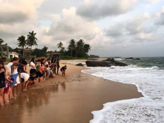 Ready, set, go! 🐢This evening our volunteers got the chance to release over 150 baby turtles back into the wild after hatching safely in the sanctuary. Good luck little ones!  #PMGYsrilanka #pmgywildlife #turtleconservation #greenturtle #ambalangoda #Srilanka #volunteer #travelasia @planmygapyear