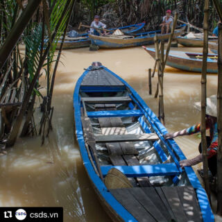 #Repost csds.vn ・・・ Visit the beautiful Mekong Delta in the South West of Vietnam, a network of rivers, floating markets, rice fields and pagodas.  How to get there? - Catch a flight to Ho Chi Minh City and book one of the several tours leaving to the Mekong Delta for a one, two or three day adventure.  #csdsvn #vietnamvolunteer #volunteer #mekongdelta #ipsl #ipslstudyabroad #hanoi #studyabroad #vietnam #buddhism #travel #wanderlust #adventure #journey #tbt #throwbackthursday
