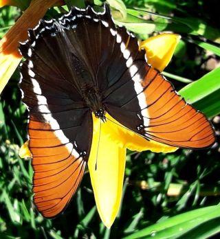 The butterflies in Costa Rica are so beautiful😍😍 #pmgycostarica #academiatica #butterfly #travelgoals #travelphotography #naturephotography #nature #volunteering #volunteerabroad #volunteertrip