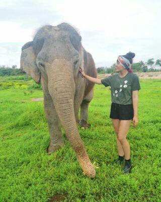 🐘 #thailand #wfft #pmgythailand #sovillliebifürdietier