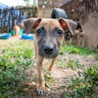 🚨 NEW PROJECT ALERT🚨⁠⠀ ⁠⠀ Being a dog in Sri Lanka is a tough life. As a result, we've teamed up with the Department of Health in the Southern Province to establish a new dog shelter project starting in early 2020. 🐕⁠⠀ ⁠⠀ #pmgy #planmygapyear #pmgysrilanka #pmgywildlife⁠⠀